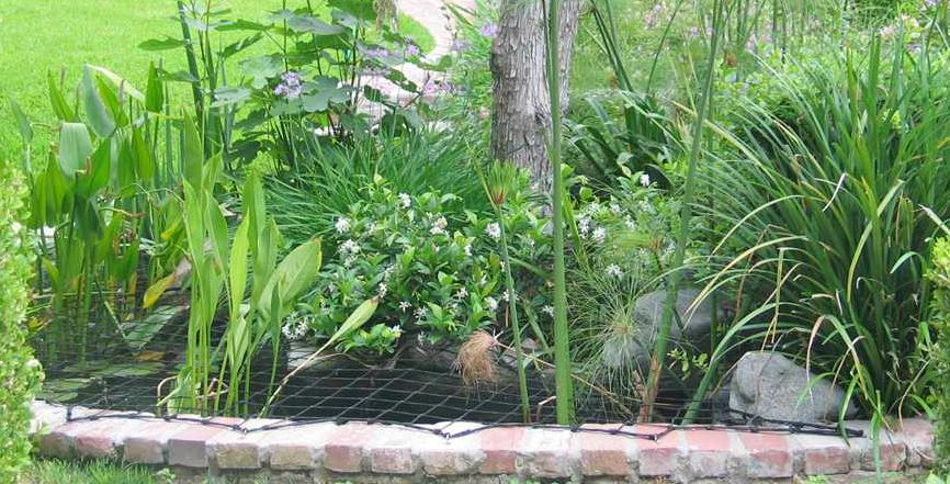 Pond net with mature plants